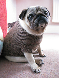 Ravelry Pug Dog Sweater pattern by Angelcatkins (Elizabeth