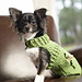 Dapper Doggie Sweater pattern