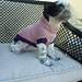 Barkley Dog Sweater pattern