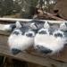 Husky Mittens pattern