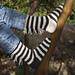 Cat's Zebra Socks pattern
