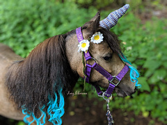 Amazing horn by Amy Lohmann for her darling horse/unicorn Shasta