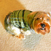 Ernie's Loved Dog Sweater pattern
