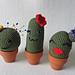 Nadelkissenkakteen - Pincushion-Cacti pattern