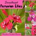 Peruvian Lily Alstroemeria pattern