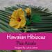 Hawaiian Hibiscus pattern