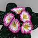 Raspberry Ripple Primrose pattern