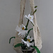 Egret Orchid Planter CAL pattern