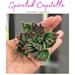 Spiraled Capitella pattern