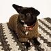 Flemming Dog Sweater pattern