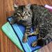 Animal Shelter Kitty Blanket pattern