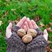 Walnut (hat and gloves) pattern