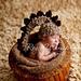 Baby Dinosaur Hat Photography Prop pattern