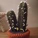 Blue Columnar Cactus pattern