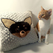 Chihuahua Cushion pattern