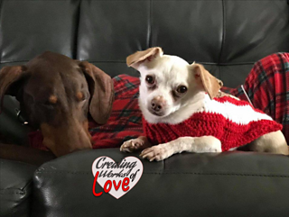 Ugly Dog Christmas Sweaters.Dog Christmas Sweater Tree Reindeer Pattern By Jennifer Macewen
