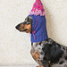 Small Dog Party Hat pattern