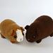 Chubby guinea pig pattern