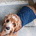 Cable Pullover Dog Sweater pattern