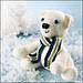 Pepe the Preppy Polar Bear pattern