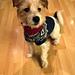 Marius-genser til hund pattern