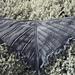 Kelp Shawlette pattern