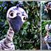Ellie the baby emu