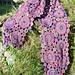 Myrtle Crochet Scarf pattern