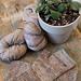 Woolen Pine Mitts pattern