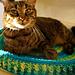 Technicolor Cat Bed pattern