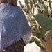 Opuntia pattern