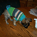 Chug Puppy Sweater pattern