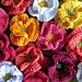Mohnblume - Poppy pattern
