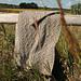 Tallgrass pattern