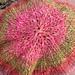 Silk Garden Beanie pattern