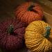 Gourdgeous Knit Pumpkins pattern