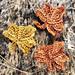 The Mini Maple Leaf pattern