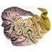 Woollsia Shawl pattern