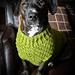 Dandy Dog Sweater pattern