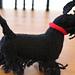 Scottish Terrier pattern