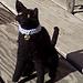 Black & White Cat Sitting pattern