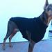 Big dog's sweater pattern