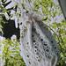 Lacy Lovelies pattern