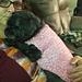 Basic Ribbed Dog Sweater pattern