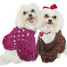 Martha Stewart Coming Home Pooch Poncho (crochet) pattern