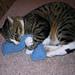 Catnip Kick Pillow pattern
