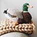 Mallard Duck pattern