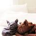 Cat Sleeping on a Hat pattern