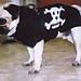 Skull and Crossbones Dog Coat pattern