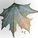 Maple Leaf Crochet Shawl pattern